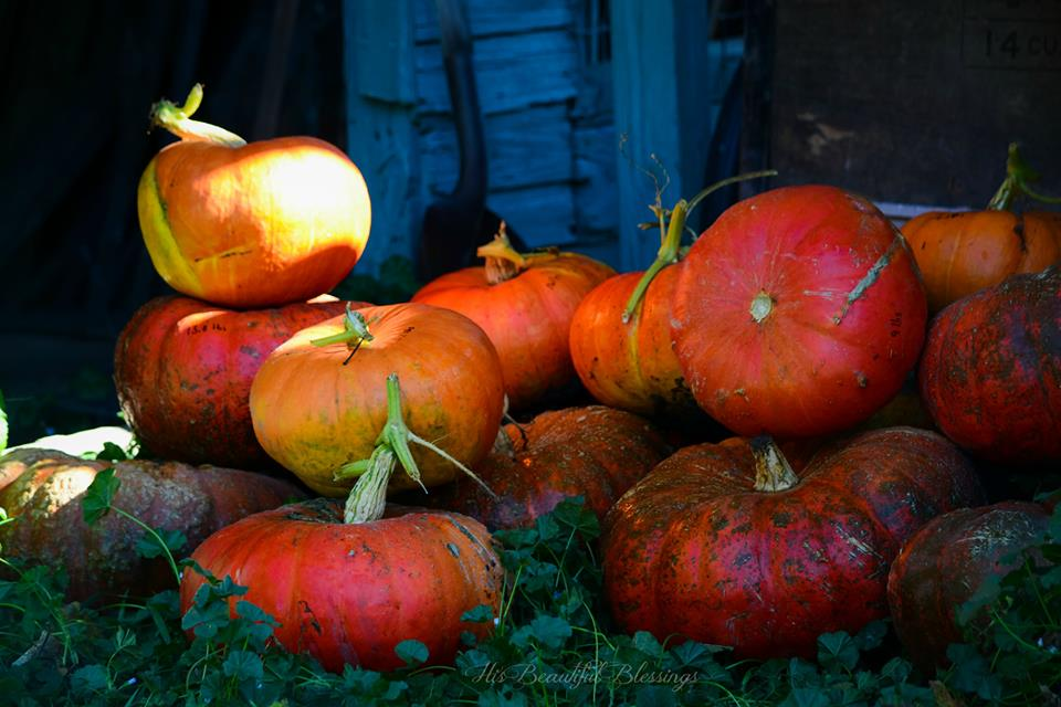 How to Cook a Pumpkin {video} | Cook It Up Paleo
